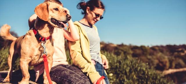 犬には人の言葉を聴きとる力がある